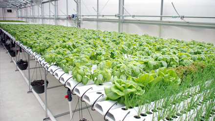 Hydroponic Application