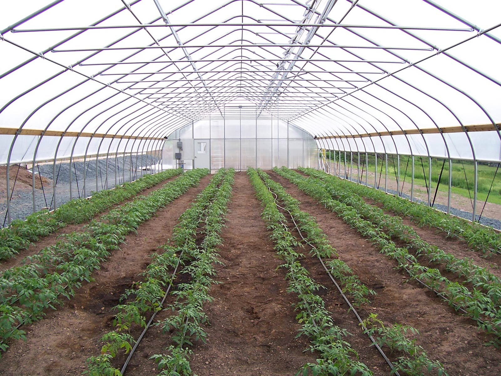 how to build a tunnel greenhouse