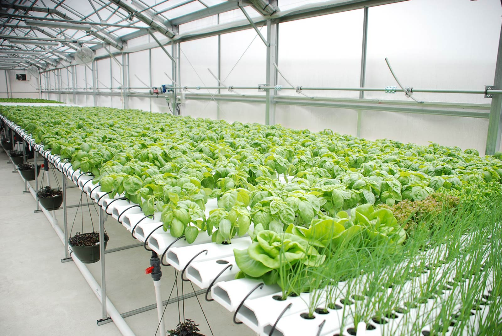 Hydroponic Greenhouse Rimol Greenhouses
