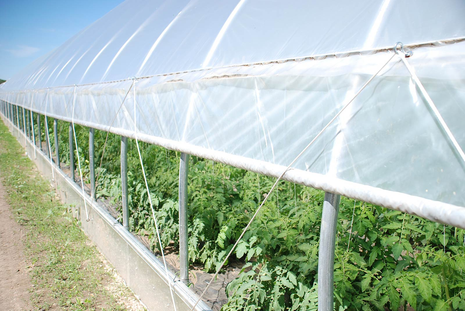 High Tunnel Greenhouse Rimol Greenhouses