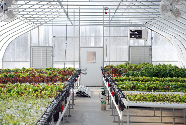 Rooftop Greenhouses And Urban Farming Are Transforming New