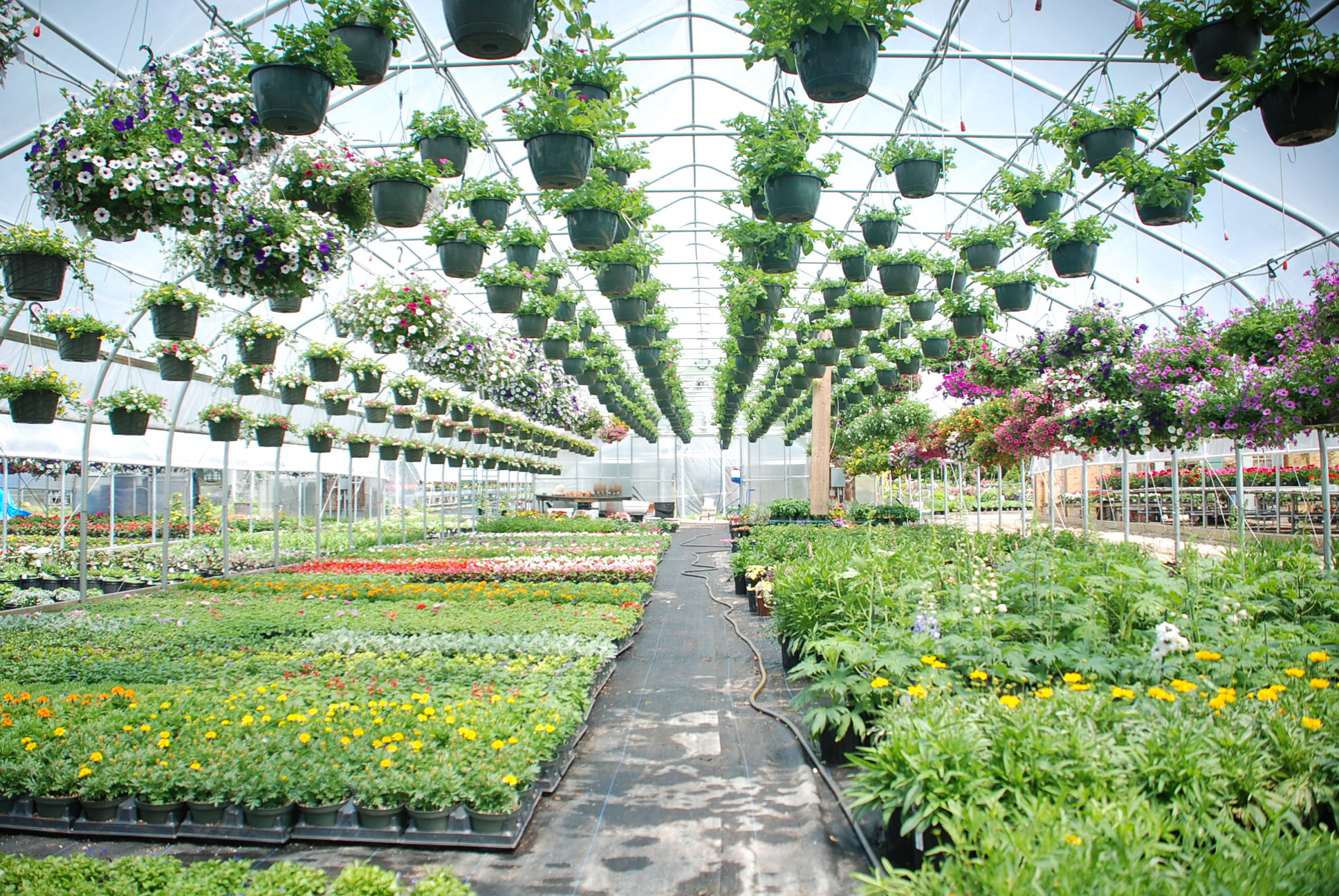 Brilliant Controlling Greenhouse Humidity During Summers Hottest Home Interior And Landscaping Dextoversignezvosmurscom