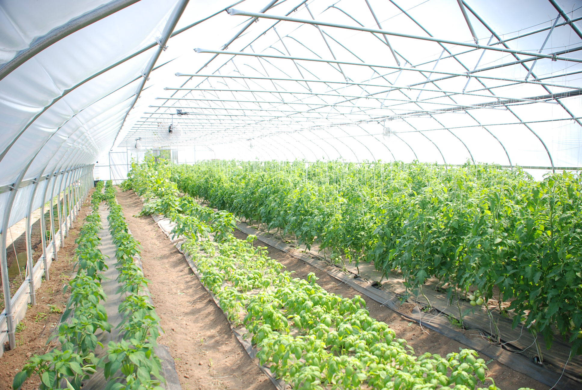 how to achieve ideal environmental control in your greenhouse