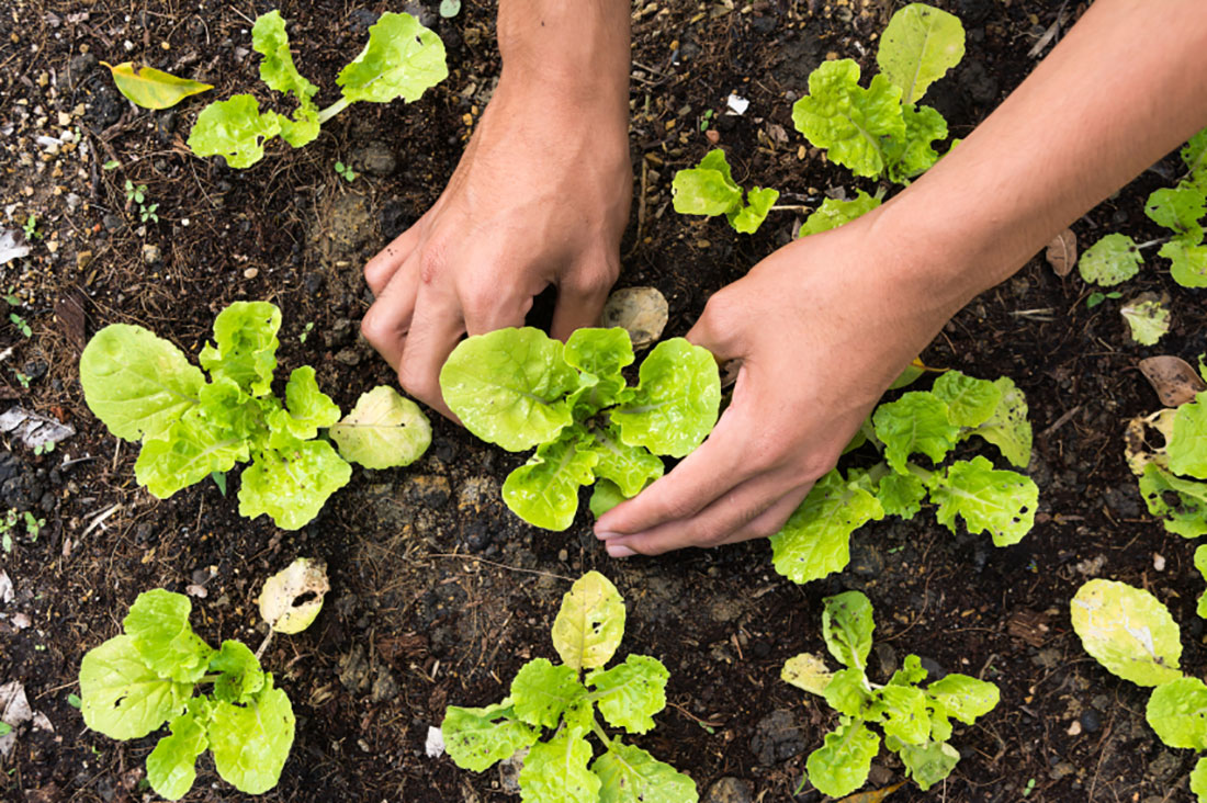 7 Steps To Start Your Own Vegetable Garden