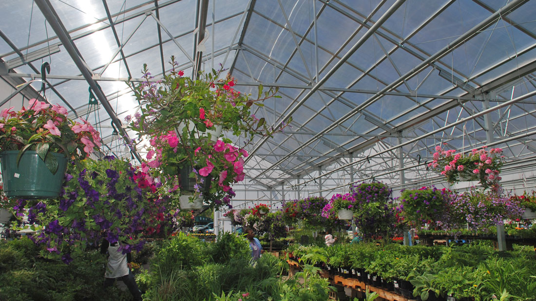 Flowers and plants growing in a Rimol Greenhouse