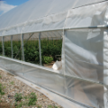 Top 5 Most Profitable Specialty Plants To Grow In A Greenhouse